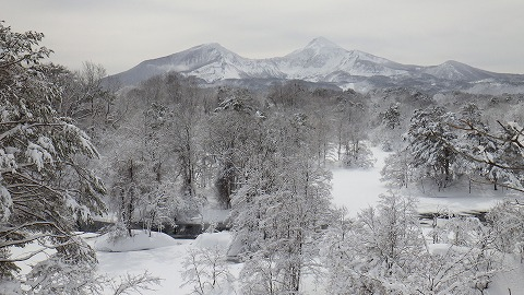 20170222レンゲ・中瀬沼 (56)